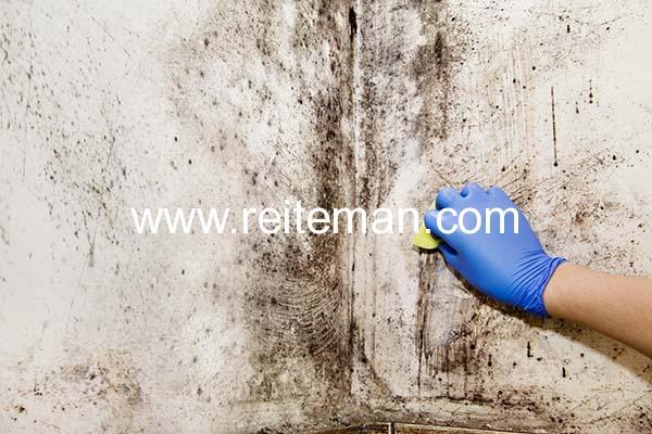 trucos para quitar el moho en las paredes